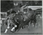 Conejo Valley Days Rodeo