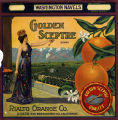 "Crate label, ""Golden Sceptre Brand."" Washington Navels. Rialto Orange Co. Rialto, San Bernardino Co., Calif."