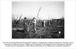 Pomology, grafting fruit trees