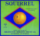 "Crate label, ""Squirrel Brand."" Temporary Label. Grown and packed by Arlington Heights Fruit Co. Riverside, Calif."