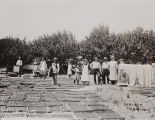 Photograph of an apricot drying camp