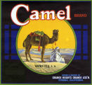 "Crate label, ""Camel Brand."" Orange Heights Orange Assn."