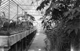 [Greenhouse, UC Davis]