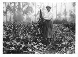 [Plant anatomist Katherine Esau standing in a beet field]