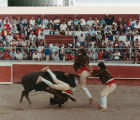 Three men and a fighting-bull in a bloodless bullfight near Crows Landing, California, April 30, 1989.