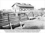 Barns, sheep