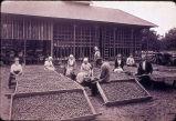 Walnut trays, Smith Ranch