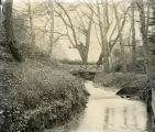 Photograph by Taber of a creek at Mills College