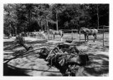 Horses in corrals/saddles at Cuyamaca Rancho State Park