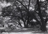 Photograph of Madame Modjeska's Forest of Arden