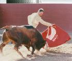 A fighting-bull charges a matador's muleta (red cape) near Escalon, California, July 2, 1989.