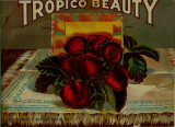 Tropico Beauty