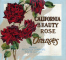"Crate label, ""California Beauty Rose."" Oranges. Packed by Paddock Company, Riverside, California."