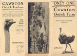 """Cawston Ostrich Farm Pamphlet: """"Only One""""  (Front)"""
