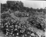 Flowers at Kearney Park