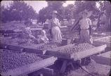 Smith Ranch, walnut trays