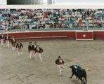 The forcados (bull grabbers) line up in a bloodless bullfight near Crows Landing, California, April 30, 1989.