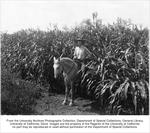 Agronomy, Field #3, Honey sorghum