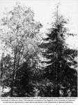 Arboretum, Redwood Grove