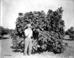 Fig Industry