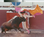 A matador displays his style in a bloodless bullfight near Escalon, California, July 2, 1989.