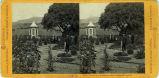 Eadweard Muybridge stereoscopic photograph of garden