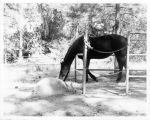 Horse in Corral in Cuyamaca Rancho State Park