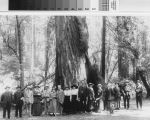 Visitors around big tree in Muir Woods National Monument
