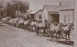 Photograph of horse team hauling barley in Santa Ana
