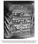 Avian Sciences