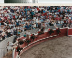 The forcados roll into the bloodless bullfight ring near Crows Landing, California, April 30, 1989.