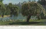 Postcard of Lake at Lucky Baldwin's Ranch--Lake and Trees