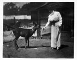 Anita Baldwin Feeding her Deer Named Caza