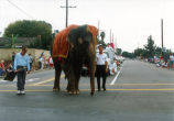 Photograph of elephant leading Heritage Day Parade