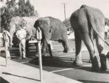 Elephants at parking meters.