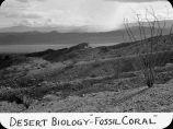 "Desert biology - ""Fossil Coral"" / Lee Passmore"