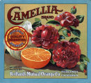 "Crate label, ""Camellia Brand."" Pure Gold Quality Guaranteed Oranges."