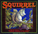 """Crate label, """"Squirrel Brand."""" Grown and Packed by Arlington Heights Citrus Co., Riverside, Calif."""